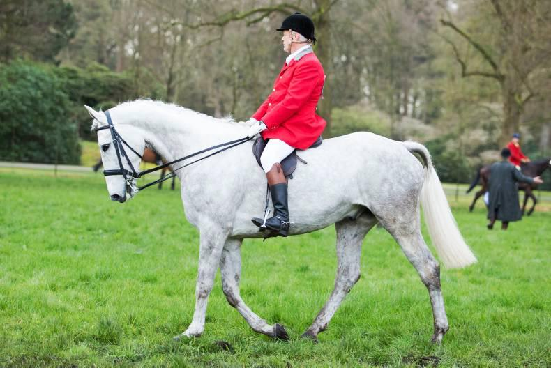 LETTER:  Irish horses are cool, intelligent and willing