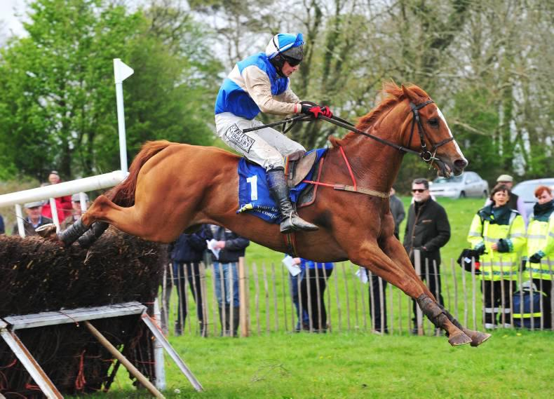 Irish pointers star in Doncaster catalogue
