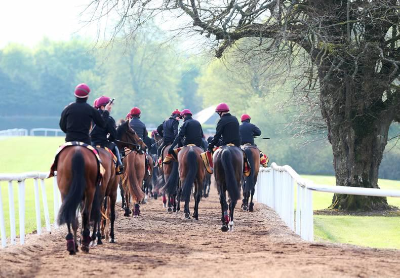 ITBA NEXT GENERATION: Great day at Ballydoyle and Piltown