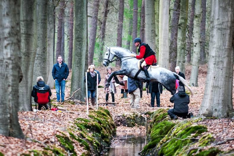 Irish exports shine at Dutch hunting championships