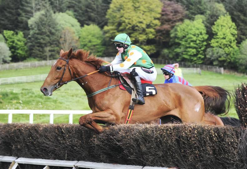 TATTERSALLS CHELTENHAM SALE: Redhotfillypeppers makes sweet music