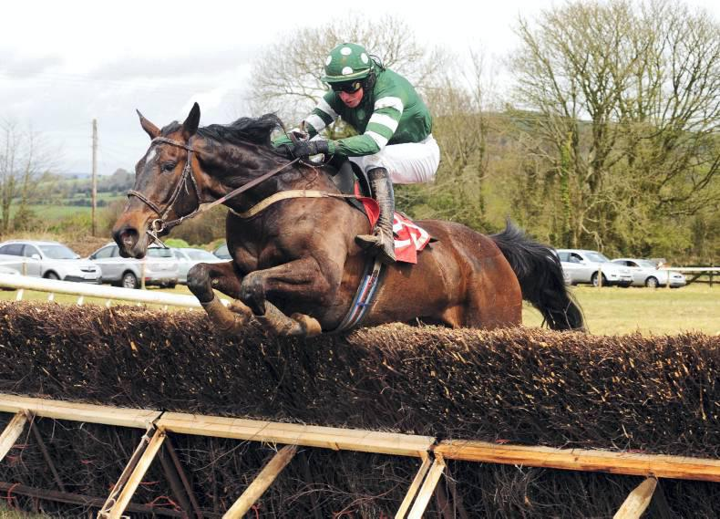 POINT-TO-POINT: Statistics tell the story of Irish pointers track success