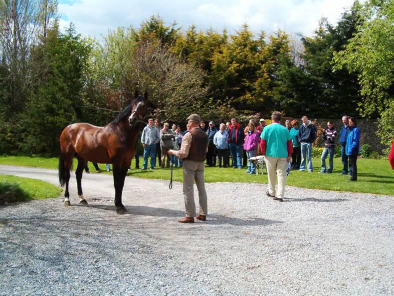 Equine discussion groups hailed as a 'game-changer'