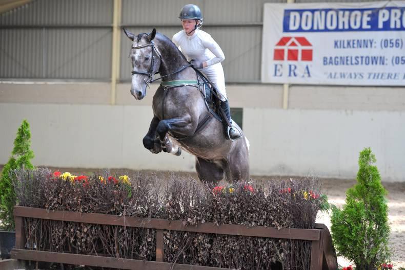 Limestone Romeo woos buyers at €30,000