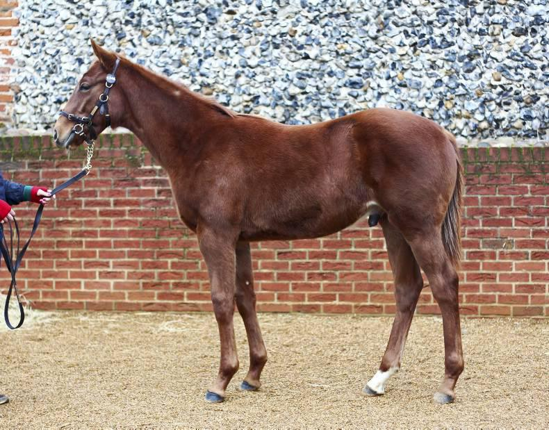 Minister stands over foal levy