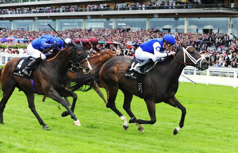 North American wonder mare Tepin takes Ascot by storm