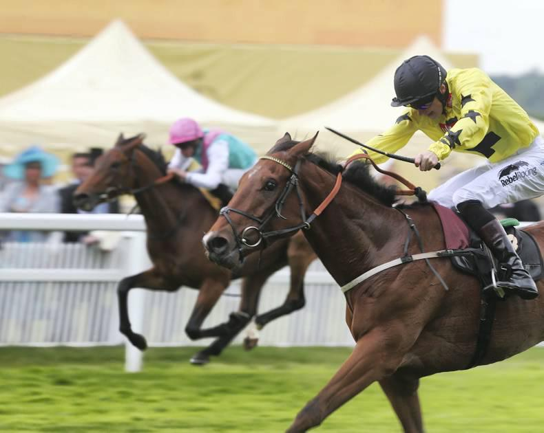 ROYAL ASCOT: Primitivo proves best in King George