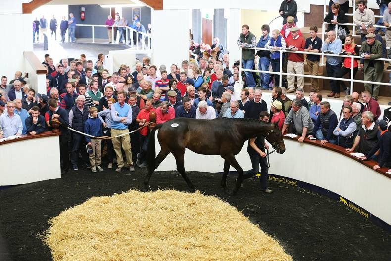Willie Mullins to train €255,000 Derby Sale gelding