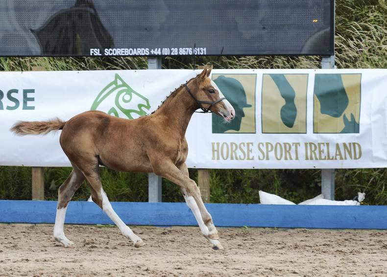 €30,000 HSI foal championships