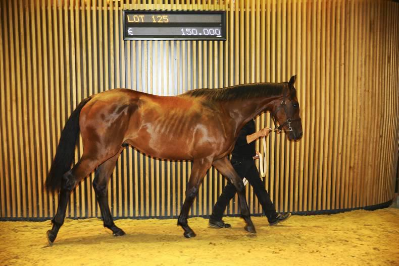 VIDEO: Stunning renewal of Arqana Summer Sale