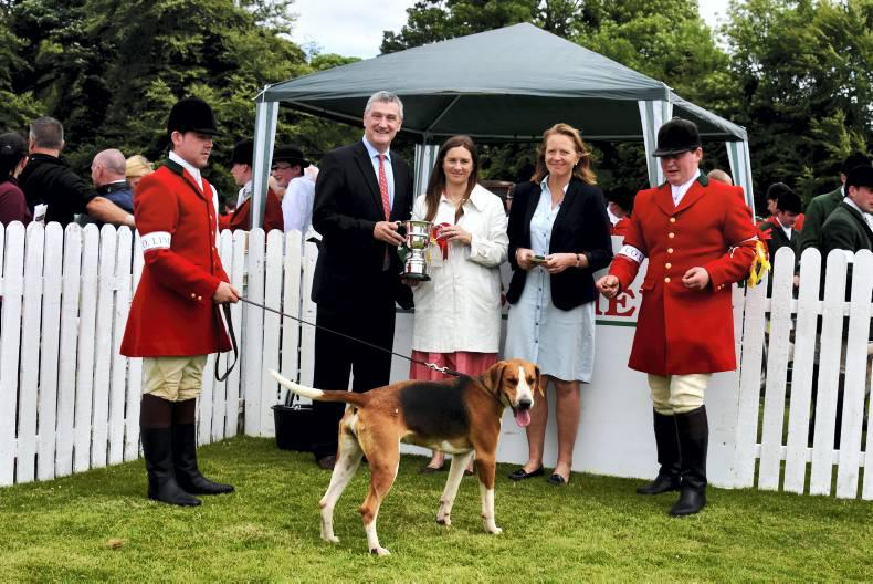 Top hound pedigrees on show