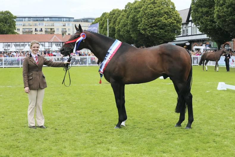 Not enough thoroughbreds for Croker Cup