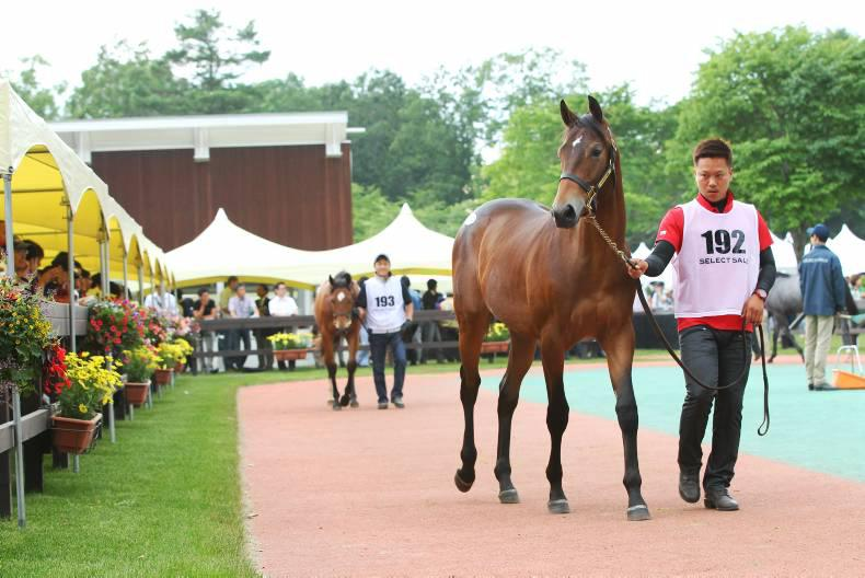 Deep Impact set to dominate the Japanese Select Sale