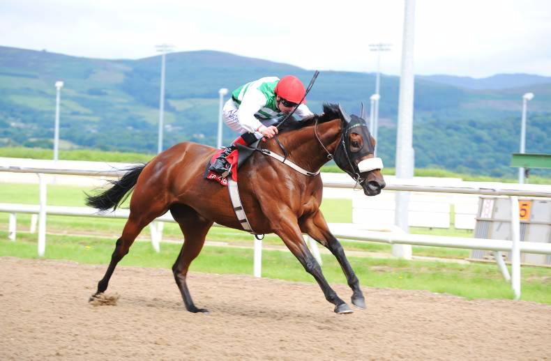 DUNDALK TUESDAY:  Chiclet relishes Dundalk speed test