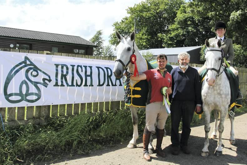 Irish Draughts pull their weight at Dirraw Farm