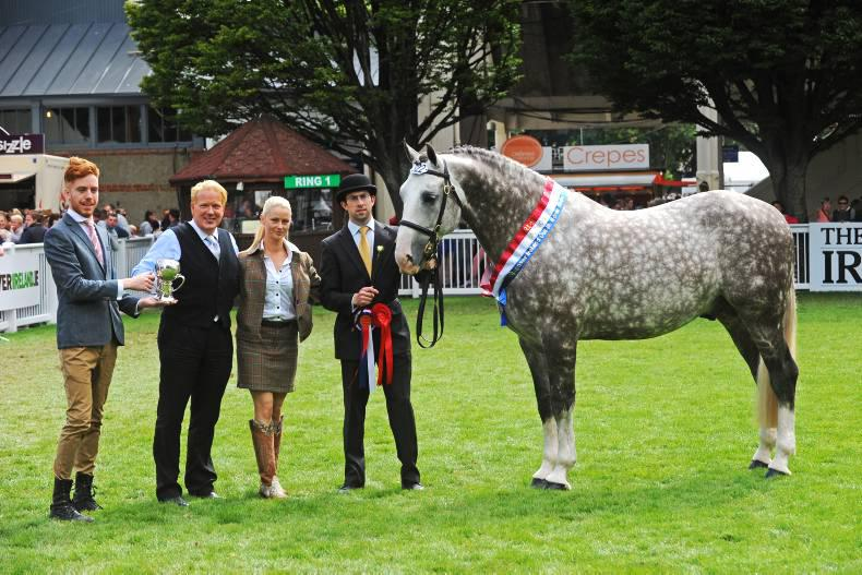 Dublin Horse Show preview: Cappa Stud aims for Irish Draught 4x4 win