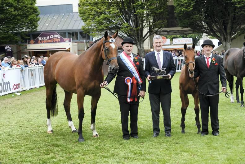 Richest prize: The Irish Field Breeders Championship