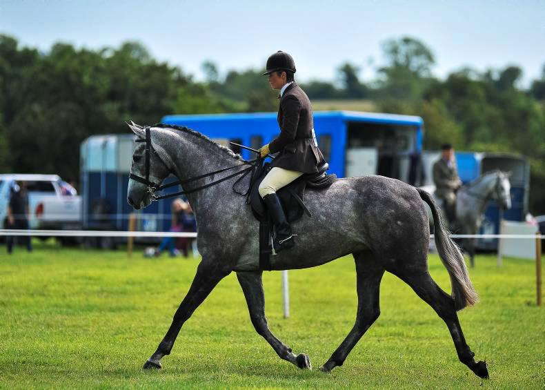 Dublin Horse Show preview: Supreme style in the show hunter classes