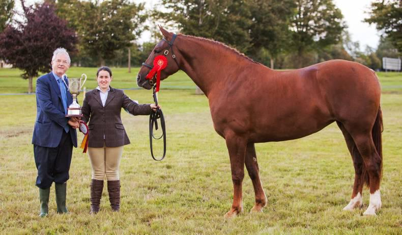Dublin Horse Show preview: Irish Draughts on the upturn