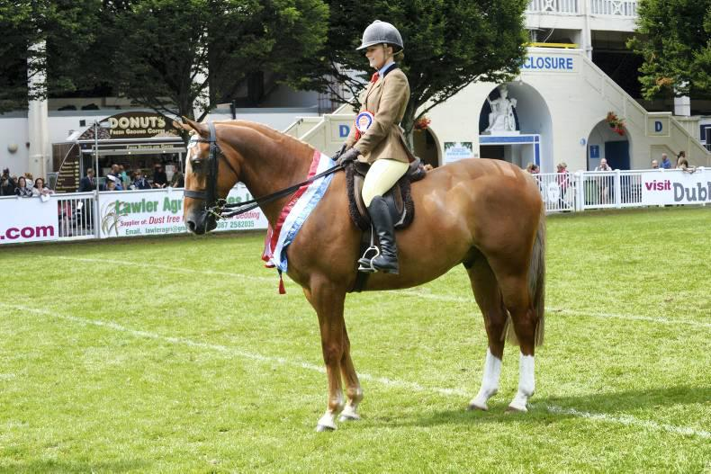 Dublin Horse Show preview: Connemara, working hunter and show hunter pony