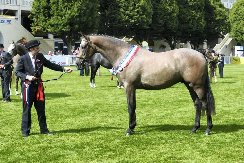 Dublin Horse Show preview: New championship for young horses