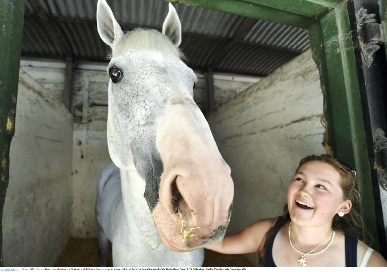 It's showtime: Dublin Horse Show starts today