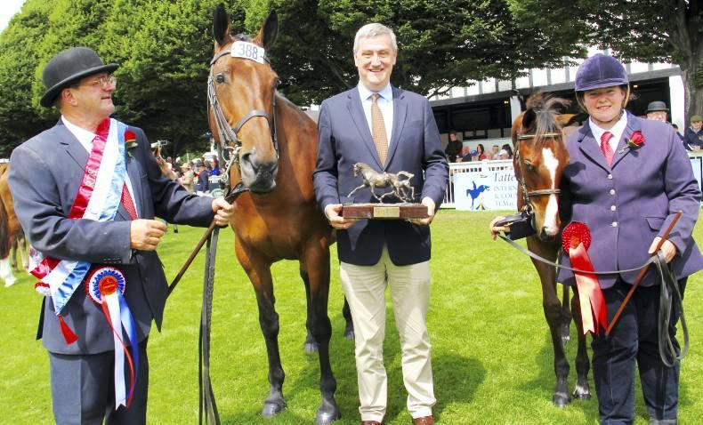 Regal spectator for The Irish Field Breeders Championship