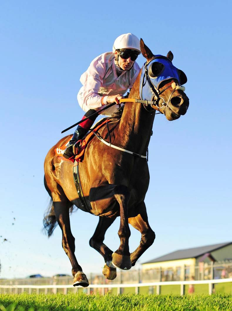 Swamp Fox takes control in Galway feature