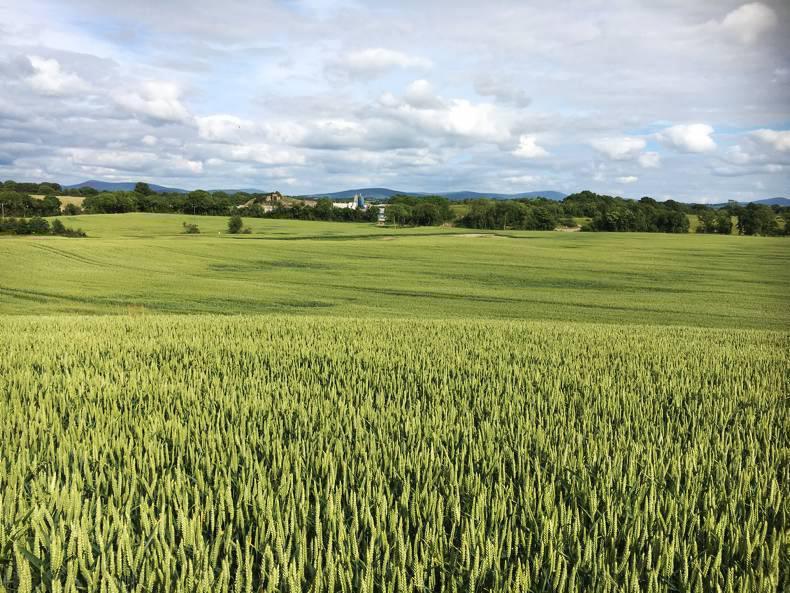PROPERTY: 106-acre Kilcullen farm set for auction