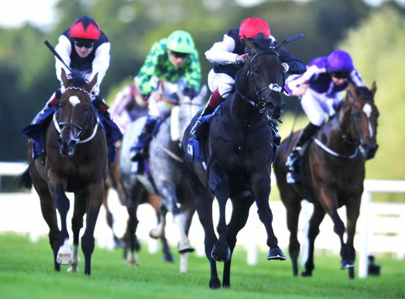 Hawkbill and Almanzaor added to Qipco Irish Champion Stakes