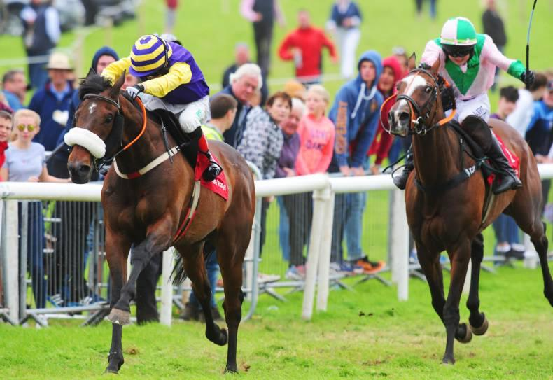PONY RACING: Dylan in top treble Dingle form
