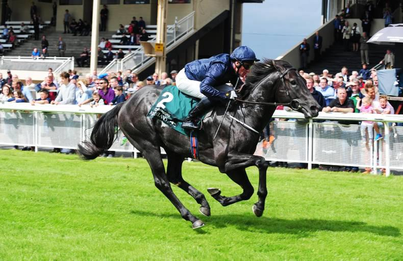 TIME WILL TELL: Caravaggio below best in Phoenix Stakes