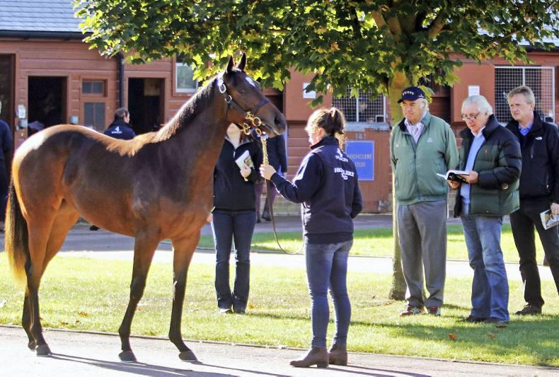 All Tattersalls' yearling catalogues online
