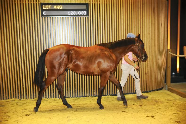 Siyouni colts dominate final day of Arqana Yearling Sale