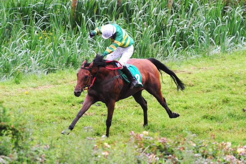 PONY RACING: Farmer Boyce shines for Sheehy