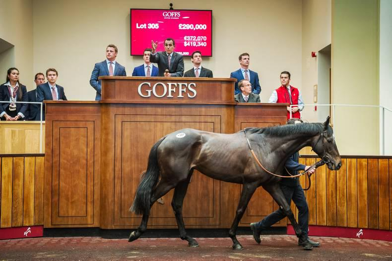 French trade bodes well for Doncaster yearling market