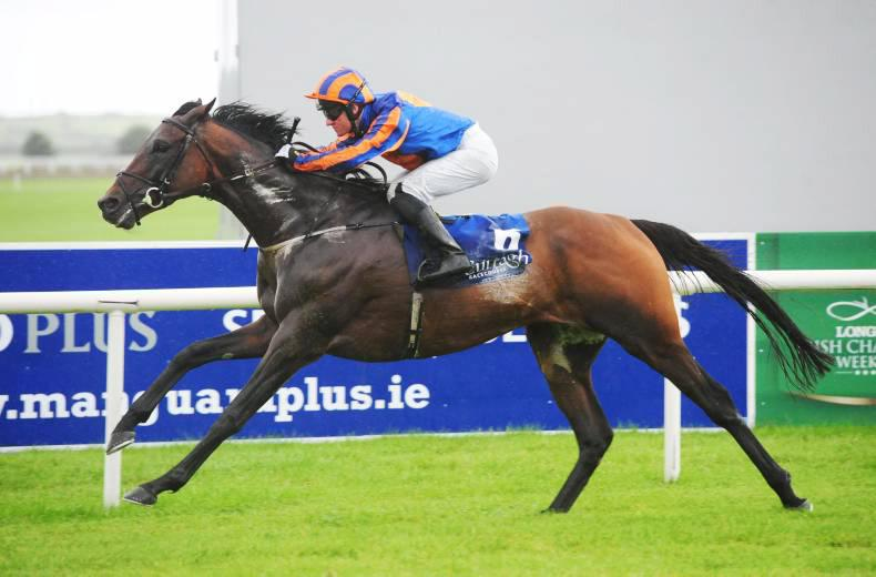 Hit The Bid causes a shock at the Curragh