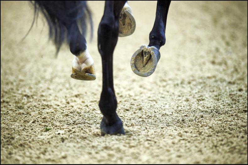 RACEHORSE TO RIDING HORSE: Kinsau impresses under Walshe