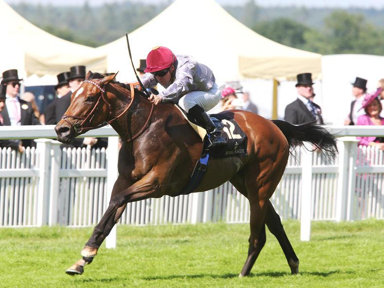French filly Qemah the star attraction in Matron Stakes