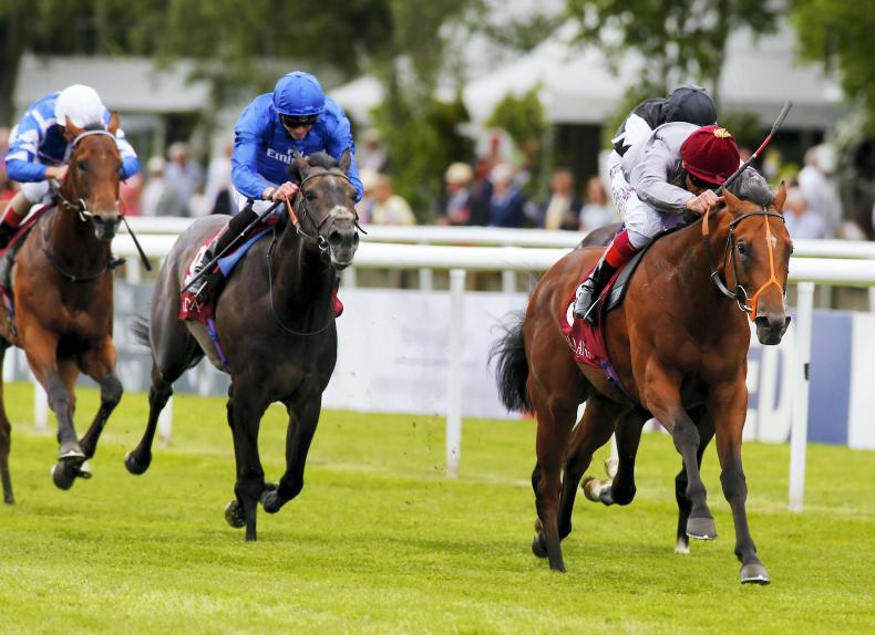 Mehmas to stand at Tally-Ho Stud in 2017