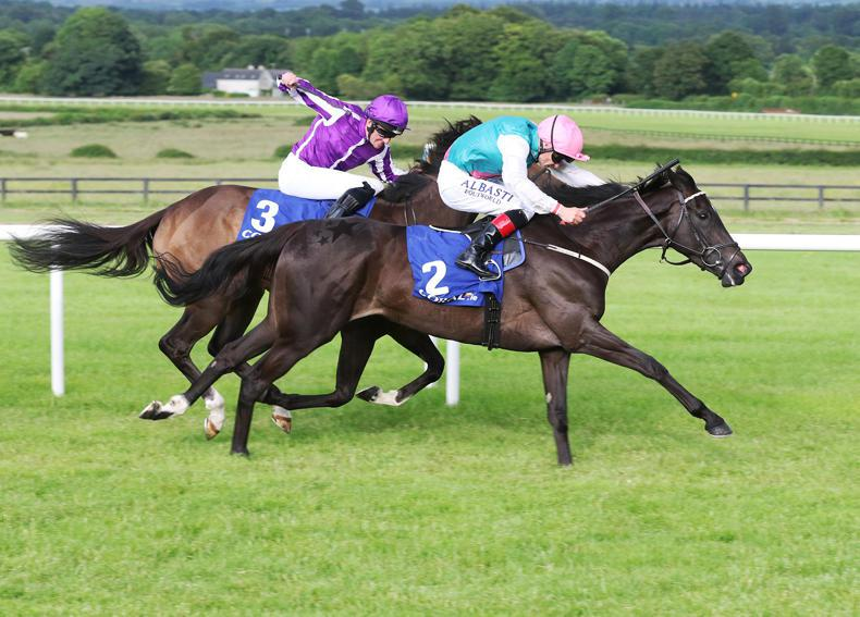 GOWRAN PARK PICK 6: Gowran Park could see massive Pick 6 payout