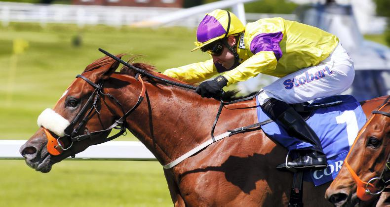 RORY DELARGY: Brando can play leading role in Ayr Gold Cup