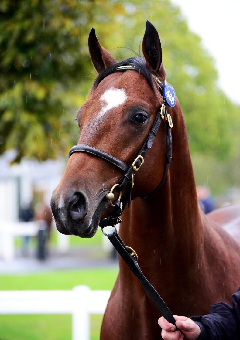 TATTERSALLS SEPTEMBER YEARLING SALE:  Pinhooks and notable purchases