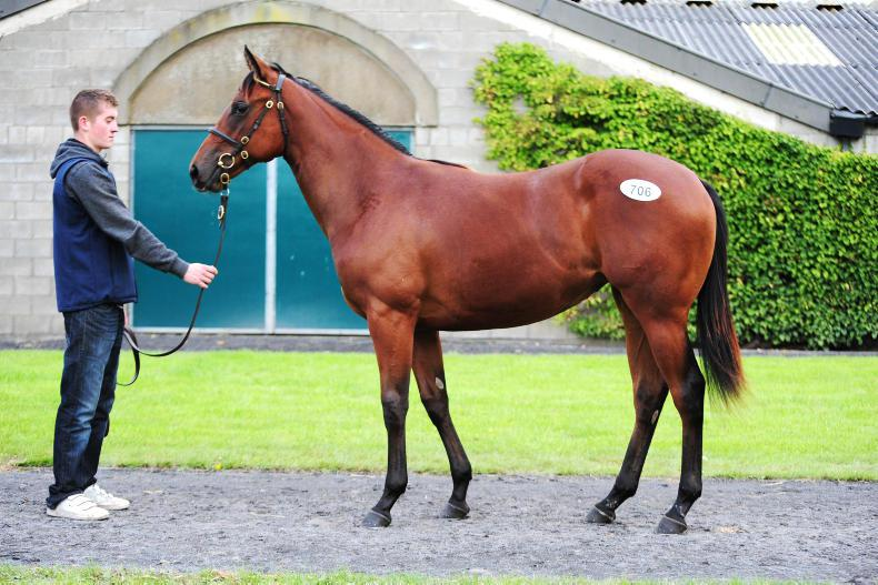 TATTERSALLS SEPTEMBER SALE - PART II: Dandy Man and Acclamation fillies top