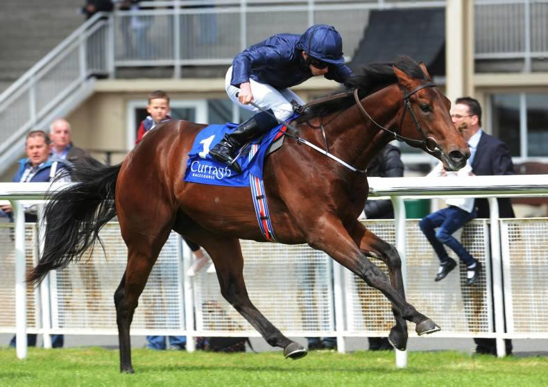 Air Force Blue retired to stud in America