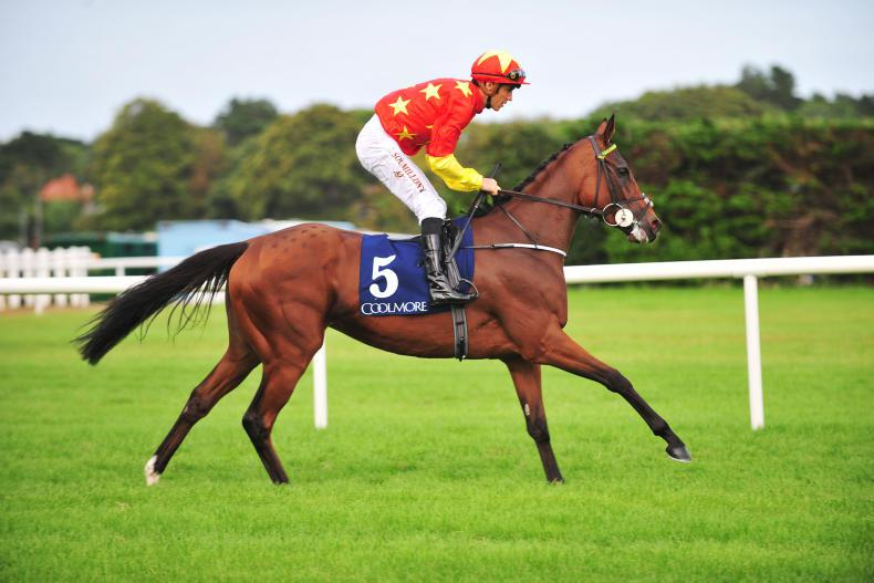 Jet Setting takes flight in Concorde cruise at Tipperary