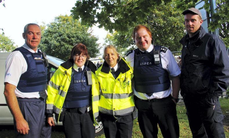 Ballinasloe: Spotted on the Fair Green