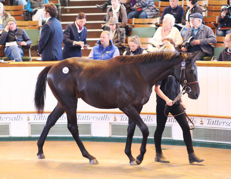 VIDEO: Joint sale-topping Dubawi colt among four seven-figured lots in Newmarket