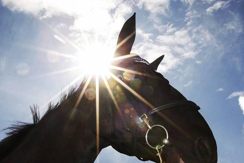 'Interactive' WSI stallion inspections