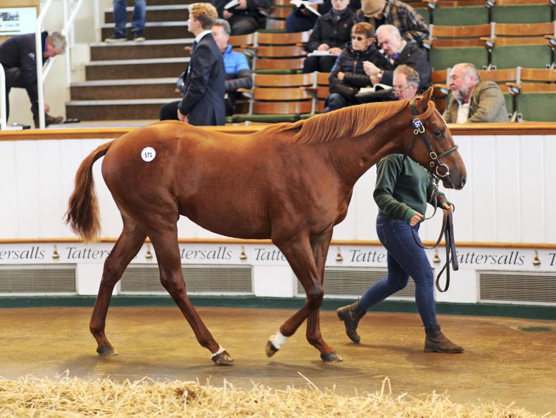 VIDEO: Shamardal colts tops solid first day of Book 2 in Tattersalls